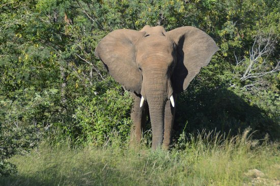 Sausage Tree Safari Camp : Elephant