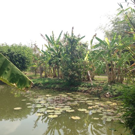 Battambang Resort: The view from our Lake room. So cool