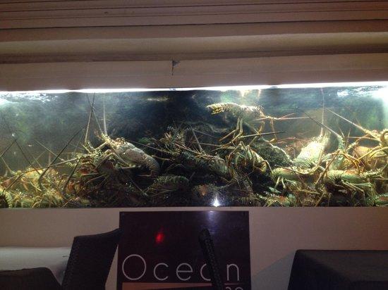 Ocean 82: Rock lobster tank