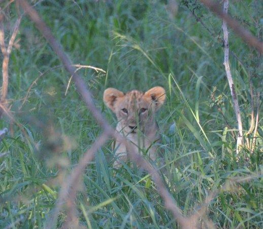 Sanctuary Makanyane Safari Lodge : So cute