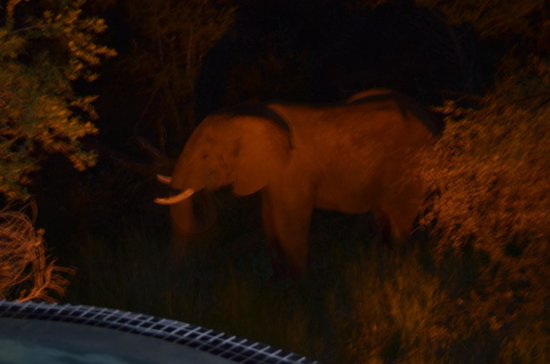 Sanctuary Makanyane Safari Lodge: A night time visitor to the pool area