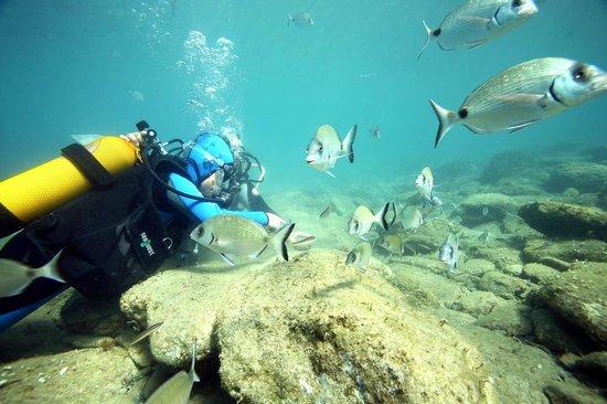 Plongée Cap Cerbère: baptême de plongée dans la réserve cerbère banyuls