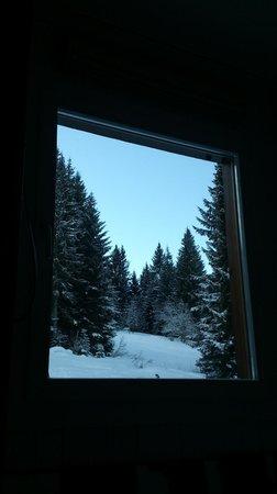 Saanewald Lodge: Aussicht Waldseite (bergwärts)