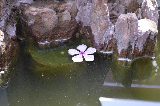 Lanna Boutique Resort: Fiskdamm på terass till rummet