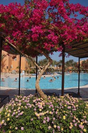 Jaz Makadi Oasis Resort and Club: аквааэробика