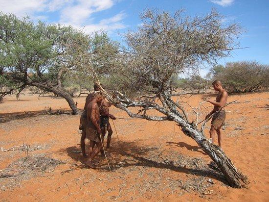 Zebra Kalahari Lodge: Bochimans