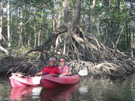 Pineapple Kayak Tours: Mangrove Tour