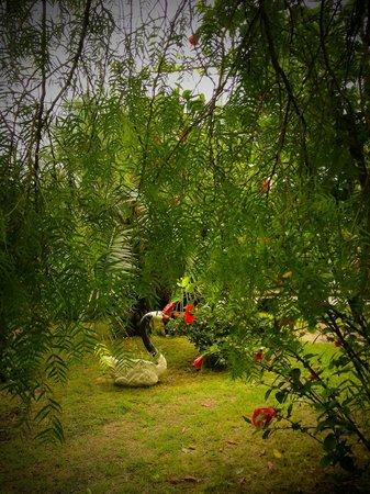 Hotel La Casona: Jardines
