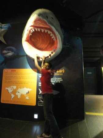 Aquaria KLCC: pic with dead jaws