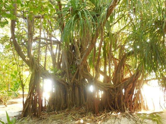 Komandoo Maldives Island Resort: Gartenanlage