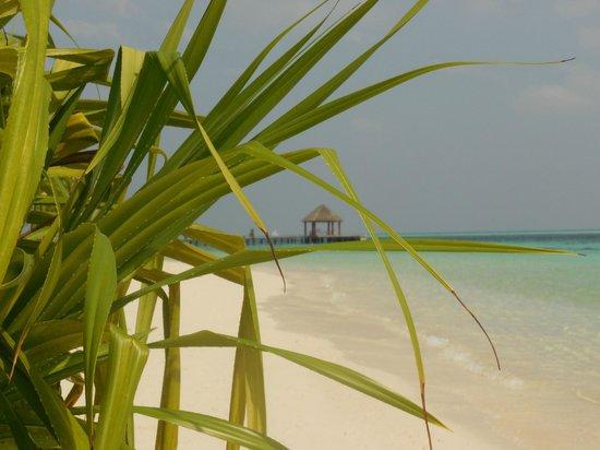 Komandoo Maldives Island Resort: Strand Ostseite