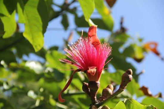 Flamands Roses Photo De Jardin Botanique De Deshaies Deshaies Tripadvisor