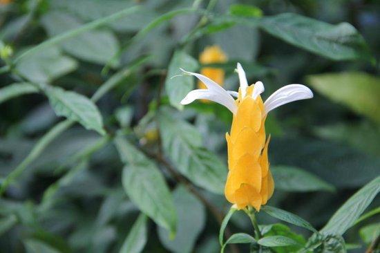 Fleur Deshaies 3 Picture Of Jardin Botanique De Deshaies Deshaies Tripadvisor