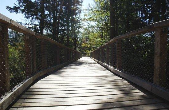 Baumwipfelpfad Bayerischer Wald: Brücke