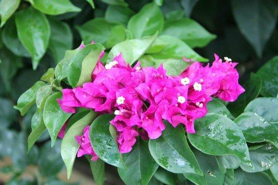 La Flore Des Guadeloupe Photo De Jardin Botanique De Deshaies Deshaies Tripadvisor