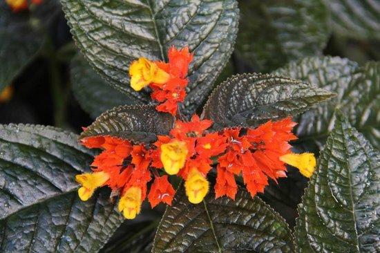 Fleur Deshaies 5 Picture Of Jardin Botanique De Deshaies Deshaies Tripadvisor