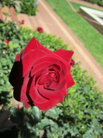 iTSuTravel - Day Tour: ROSE