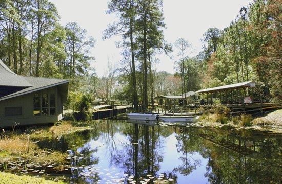Okefenokee Swamp Park Crazy the Gator - Pict...
