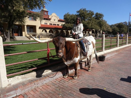 Stockyards Museum: Sitting on a Long Horn Steer!