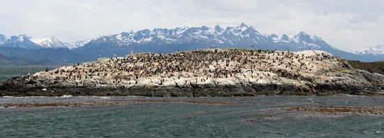Faro Les Eclaireurs: Colonie d'oiseaux sur un îlot