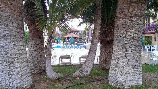 Maspalomas Oasis Club: Pool through the Palm trees