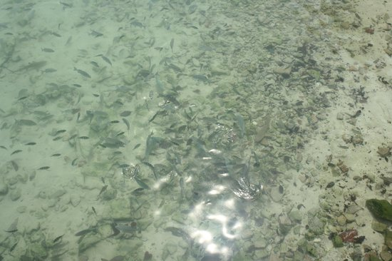 Pulau Payar Marine Park: Still alot of fih. But corals are mstly grey brain coral.Not much color.