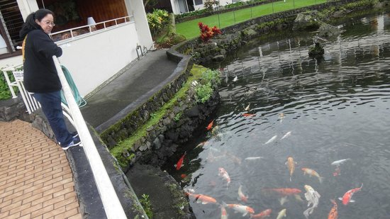 Hilo Seaside Hotel: Fish Pond