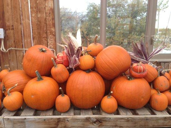 Kayben Farms: pumpkins