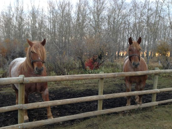Kayben Farms: Frank and Jesse