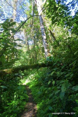 La Amistad National Park: La Amistad forest