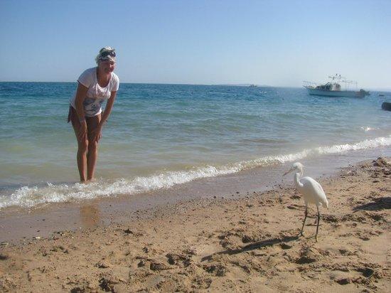 Marlin Inn Azur Resort: аист
