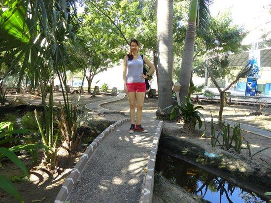 Acuario Mazatlan: Este es el estanque que estaba lamoso, con basura y donde encontramos a los chicos que lo limpia