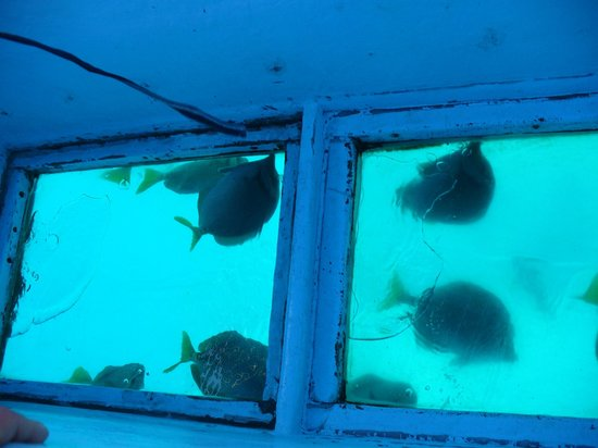 Holiday Inn Resort Los Cabos All-Inclusive : The fish under the glass bottom boat