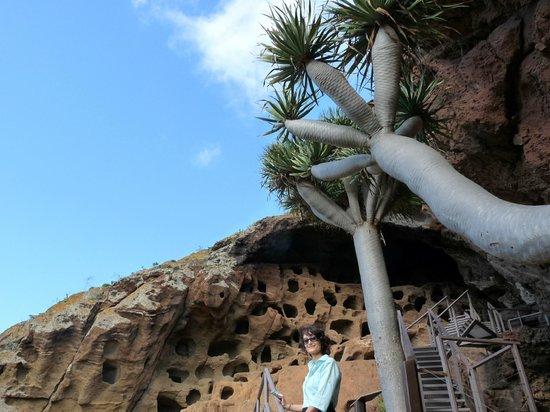 Valeron Monastery : Gli alberi del drago