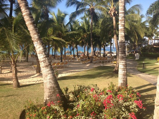 Viva Wyndham Dominicus Palace: Siaggia del Wyndham Palace