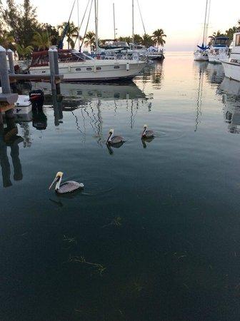 Blackfin Resort and Marina: Marina