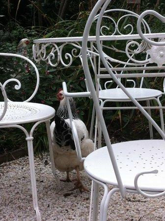 Hotel Particulier Montmartre: une poule de l'hôtel qui se promène
