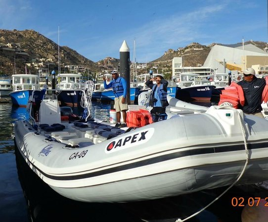 Cabo Adventures : Whale Watching Boats