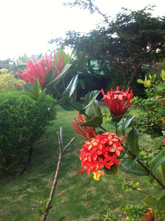 Calabash Cove Resort and Spa : Beautiful gardens !