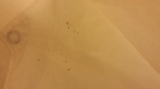 Hobby Airport Inn: Mold in bathroom
