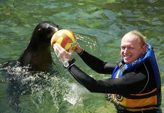 Dolphin Discovery Puerto Aventuras: Морские котики играют с гостями