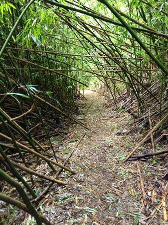 Nau Wale No Tours of Oahu: Bamboo Path