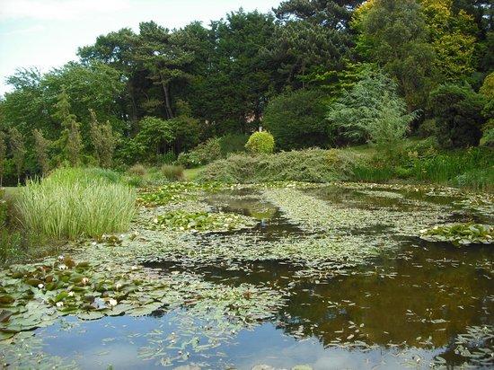 The Pines Garden: Pines Garden