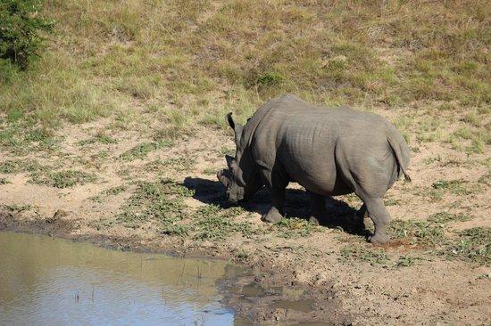 Leeuwenbosch Country House: Rhino