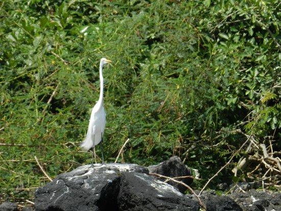 San Carlos, Nikaragua: Avistamiento de aves