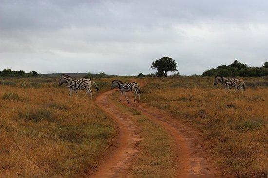 Leeuwenbosch Country House : Zebra crossing