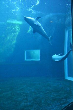 Acquario di Genova: Vasca nuova dei delfini