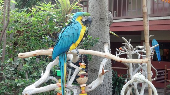 Catamaran Resort Hotel and Spa: Talking Parrots