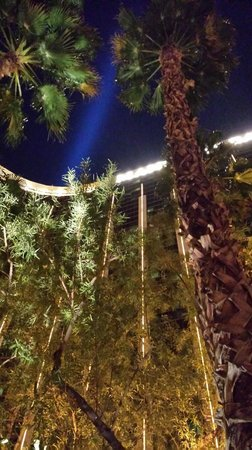 "Four Seasons Hotel Las Vegas: On a ""cold"" winters night...looking up at the palm trees...ahhh"