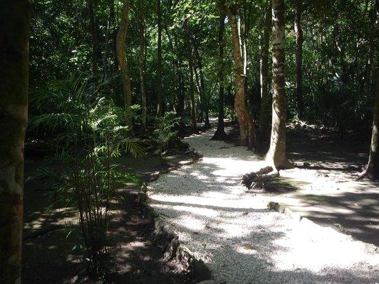 Community Tours Sian Ka'an: Muyil forest